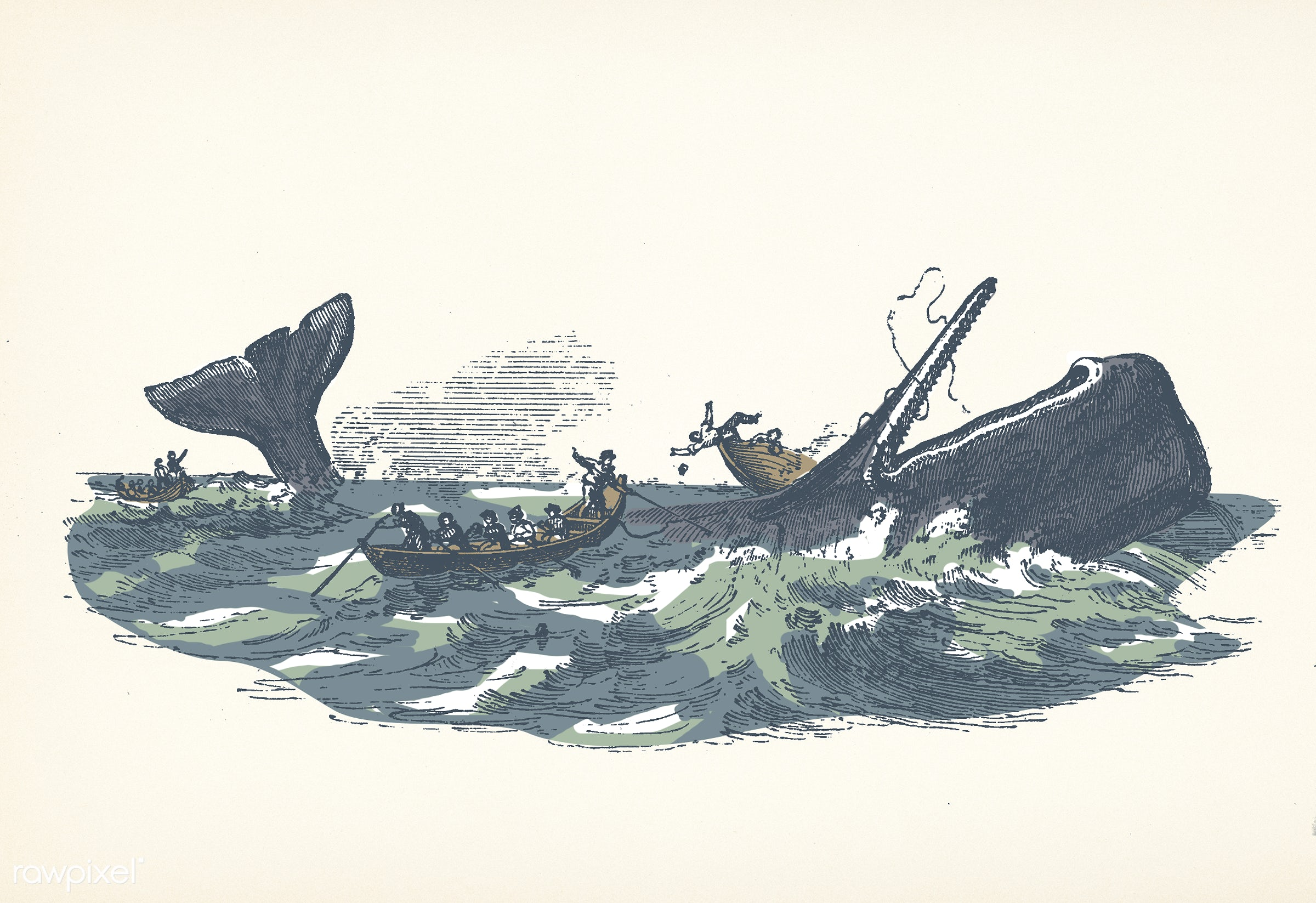 Illustration of the sperm whale while attacking fishing boat from The Natural History of the Sperm Whale (1839) by Thomas...