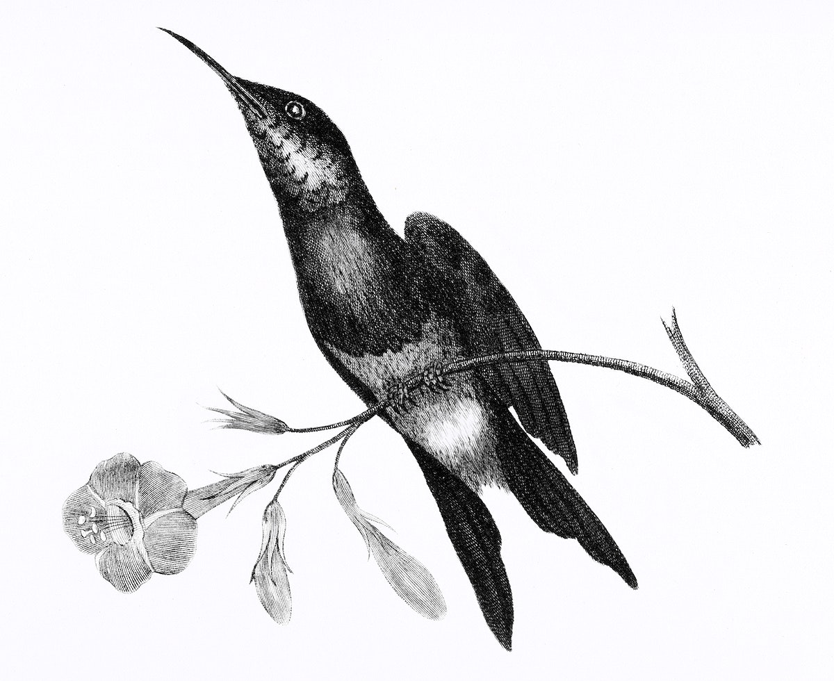 Sunbird from Zoological lectures delivered at the Royal institution in the years 1806-7 illustrated by George Shaw (1751…