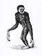 """Black long-armed gibbon and White long-armed gibbon from Zoological lectures delivered at the Royal institution in the years 1806-7 illustrated by <a href=""""https://www.rawpixel.com/search/George%20Shaw?sort=curated&amp;rating_filter=all&amp;mode=shop&amp;page=1"""">George Shaw</a> (1751-1813). Original from The New York Public Library. Digitally enhanced by rawpixel."""