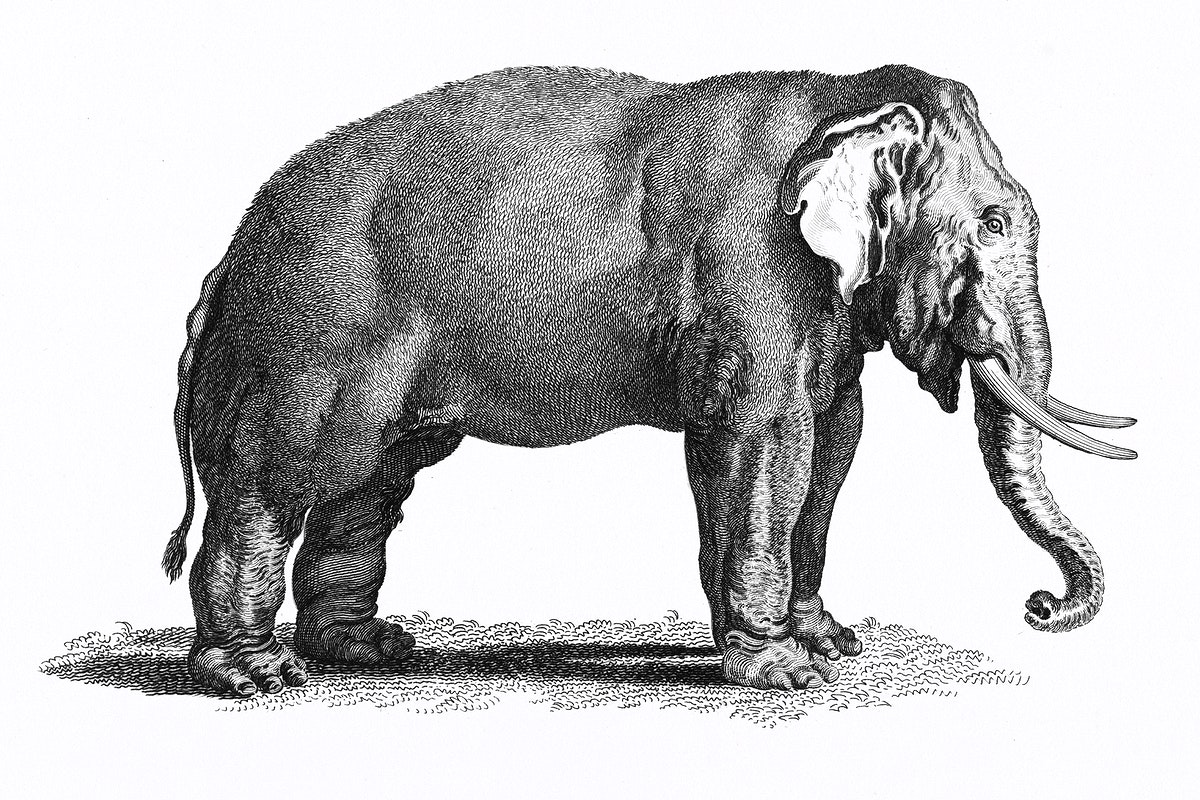 Illustration of Elephant from Zoological lectures delivered at the Royal institution in the years 1806-7 illustrated by…