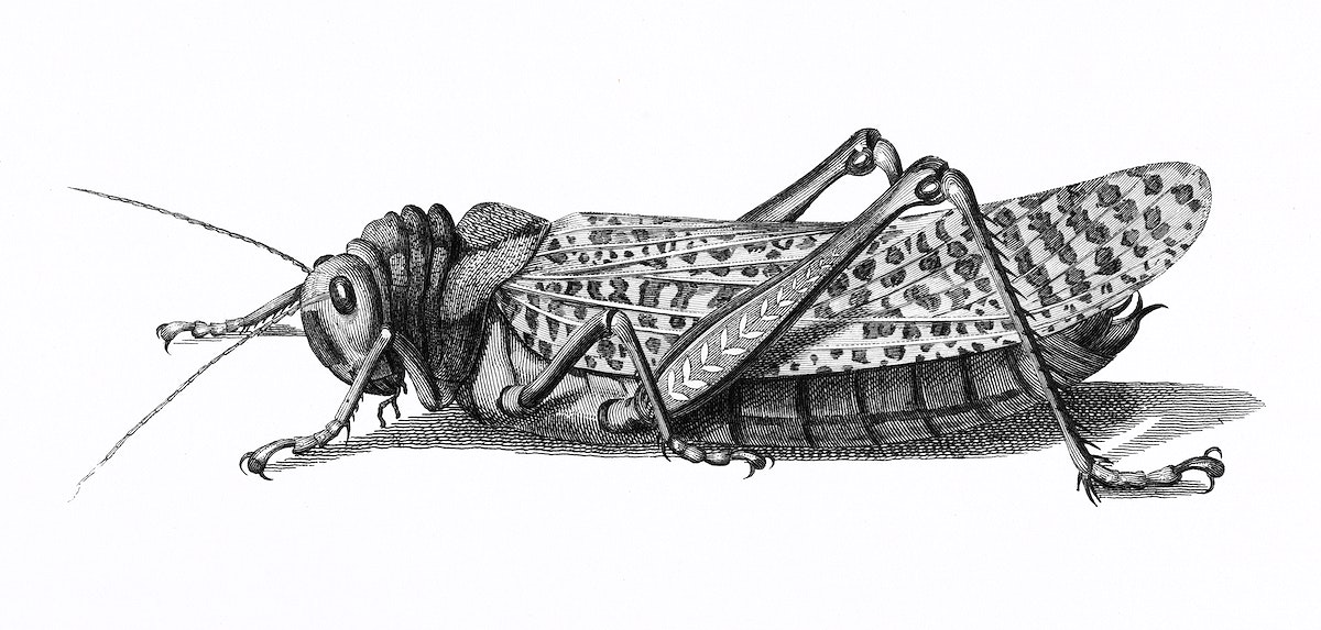 Gryllus from Zoological lectures delivered at the Royal institution in the years 1806-7 illustrated by George Shaw (1751…