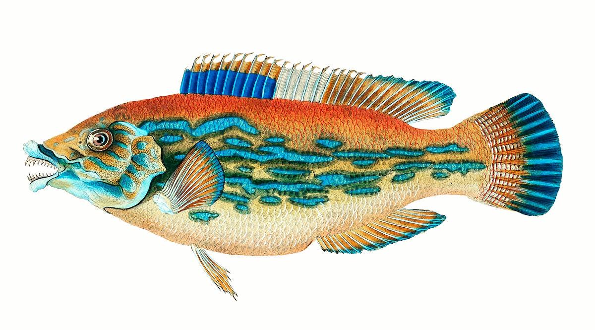 fish, weird, british fish, sea