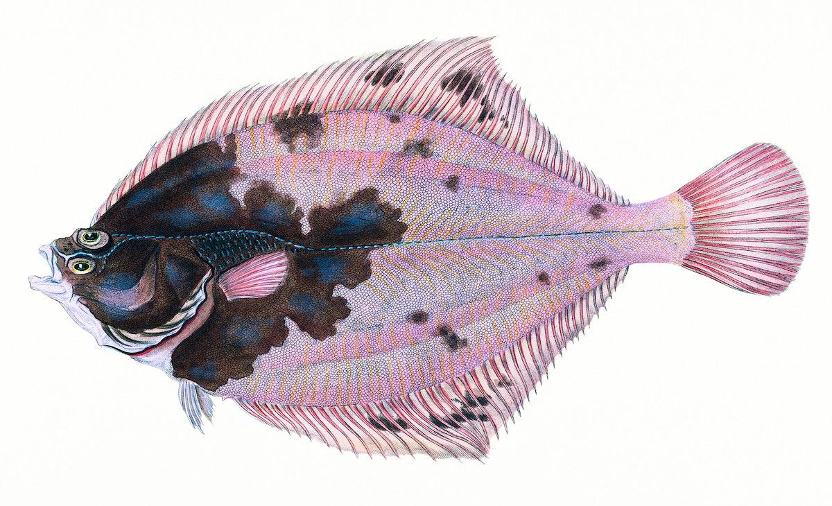 fish, camouflage, fish illustrations, hand drawn
