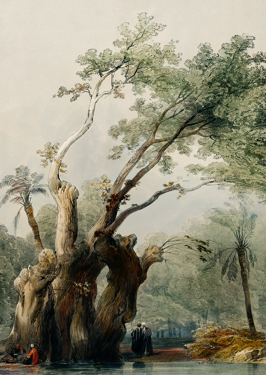 The holy tree of Metereah illustration by David Roberts (1796–1864). Original from The New York Public Library.…