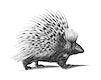 Vintage illustrations of Porcupine