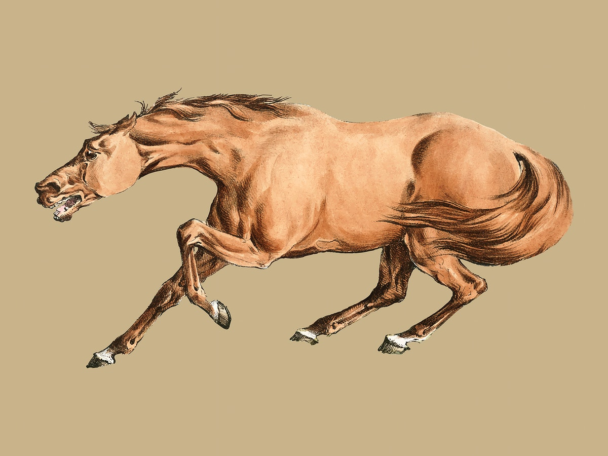 Illustration of light-brown horse from Sporting Sketches (1817-1818) by Henry Alken (1784-1851). Digitally enhanced by…