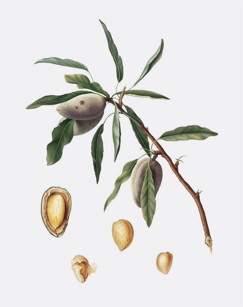 black almond tree removal - 800×1010