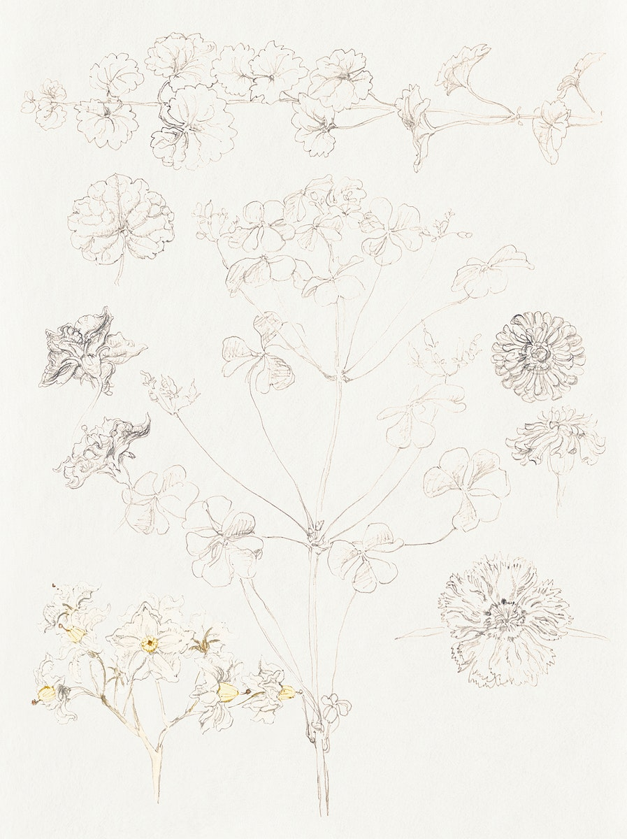 Oxalis, Zinnia, and Potato Blossom, East Hampton (July 6, 1889) by Samuel Colman. Original from The Smithsonian Institution.…