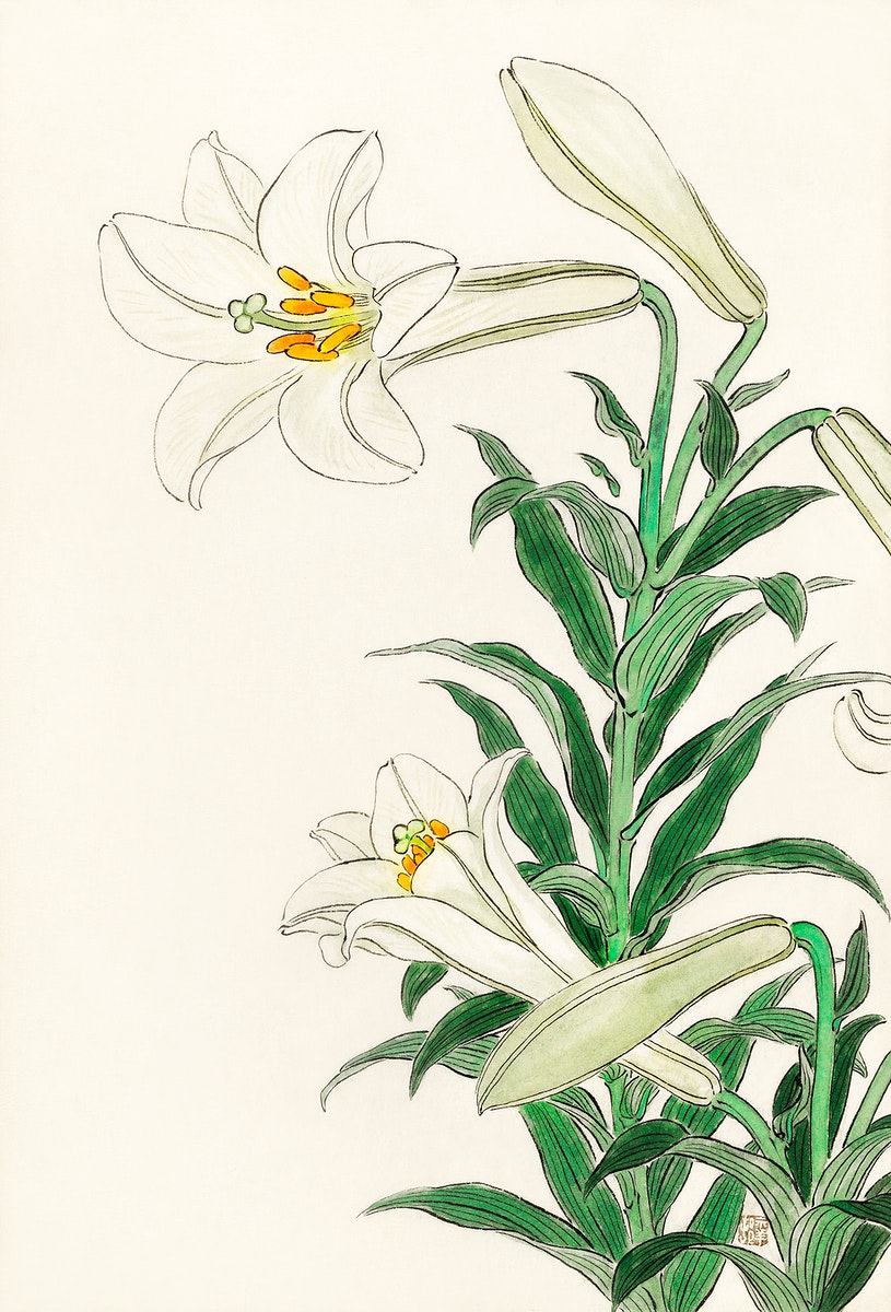 Lilies (1912 - 1930) by Ohara Koson (1877-1945). Original from The Rijksmuseum. Digitally enhanced by rawpixel.