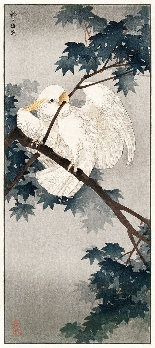 Yellow crested cockatoo in tree (1900 - 1940) by Ohara Koson n (1877-1945). Original from The Rijksmuseum. Digitally enhanced…