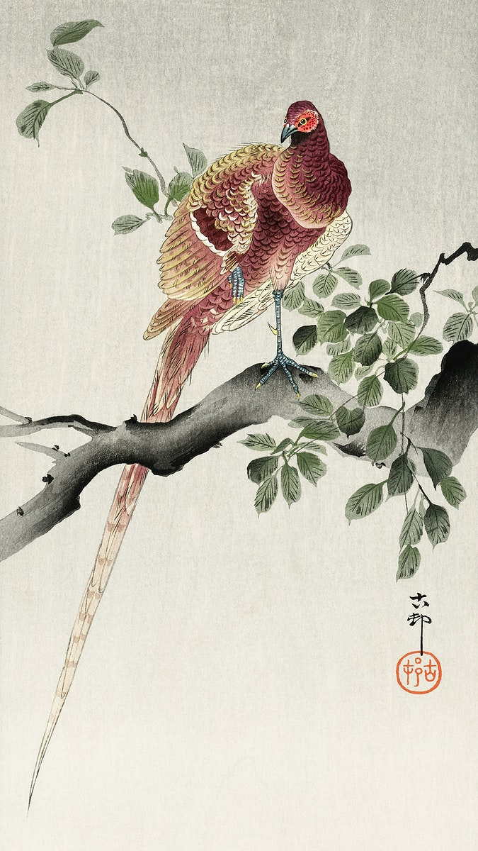 Copper pheasant (1900 - 1930) by Ohara Koson (1877-1945). Original from The Rijksmuseum. Digitally enhanced by rawpixel.