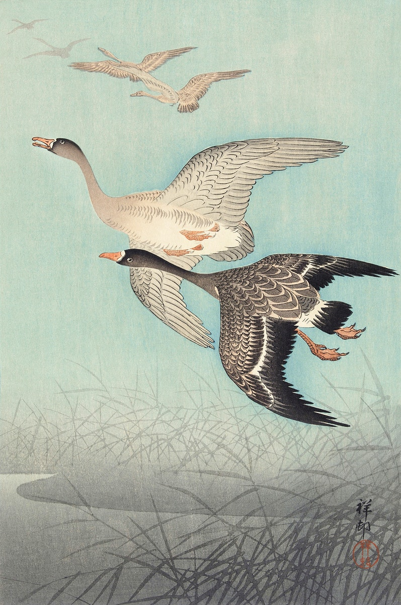 Great geese in flight (1925 - 1936) by Ohara Koson (1877-1945). Original from The Rijksmuseum. Digitally enhanced by…