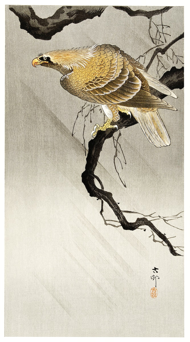Eagle on branch (1900 - 1910) by Ohara Koson (1877-1945). Original from The Rijksmuseum. Digitally enhanced by rawpixel.