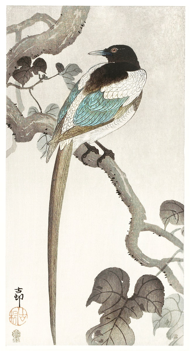 Magpie on tree branch (1900 - 1910) by Ohara Koson (1877-1945). Original from The Rijksmuseum. Digitally enhanced by…