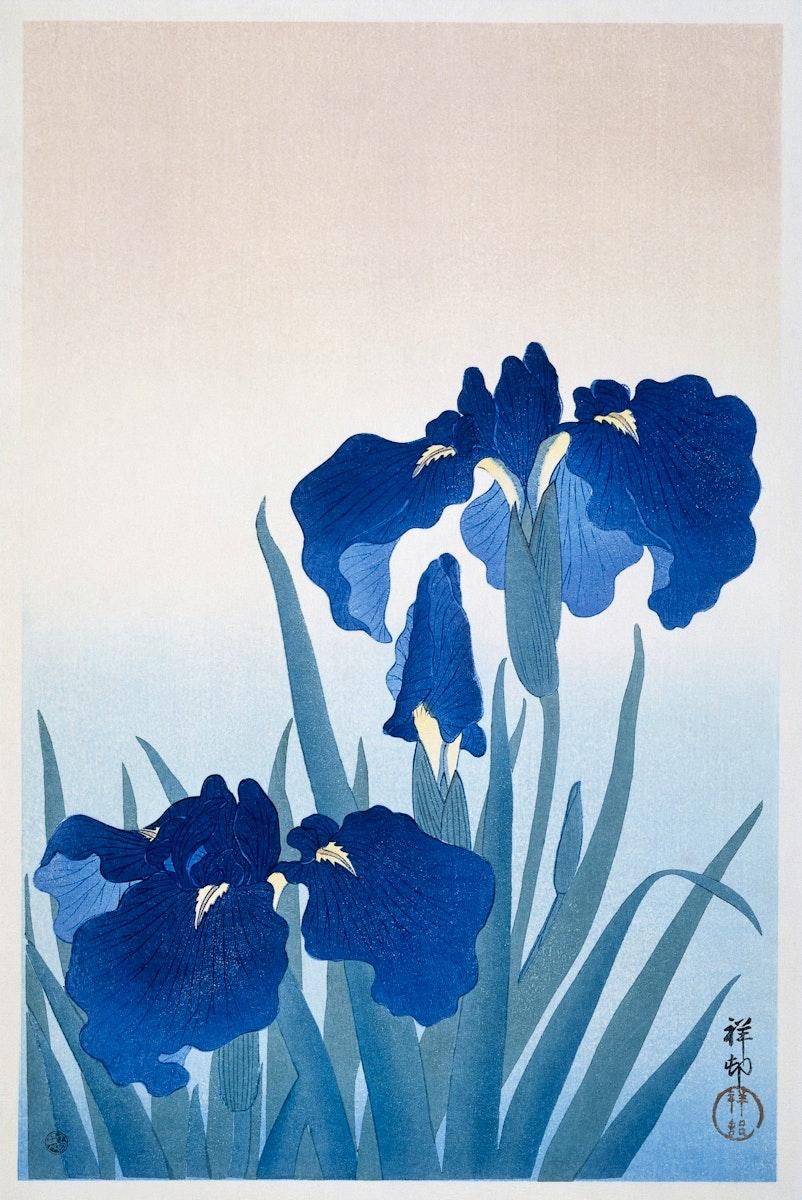 Iris flowers (1925 - 1936) by Ohara Koson (1877-1945). Original from The Rijksmuseum. Digitally enhanced by rawpixel.
