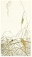 """Grasshoppers on rice plants (1900 - 1936) by <a href=""""https://www.rawpixel.com/search/Ohara%20Koson?sort=curated&amp;page=1"""">Ohara Koson</a> (1877-1945). Original from The Rijksmuseum. Digitally enhanced by rawpixel."""