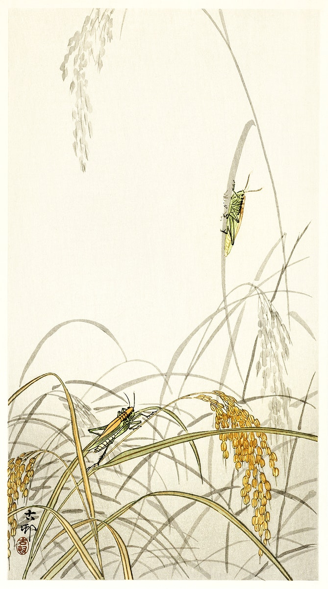 Grasshoppers on rice plants (1900 - 1936) by Ohara Koson (1877-1945). Original from The Rijksmuseum. Digitally enhanced by…