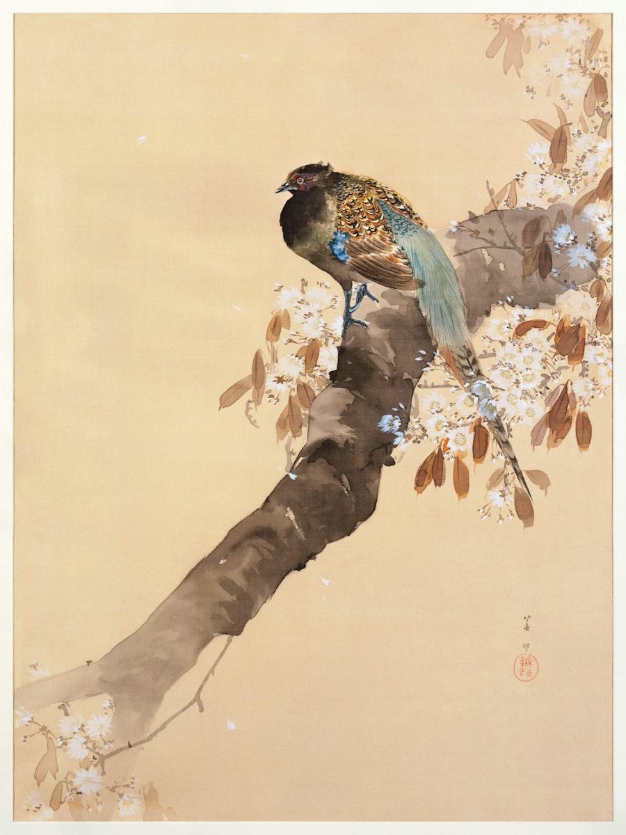 Pheasant on cherry blossom branch (1887-1945) by Ohara Koson (1877-1945). Original from The Rijksmuseum. Digitally enhanced…