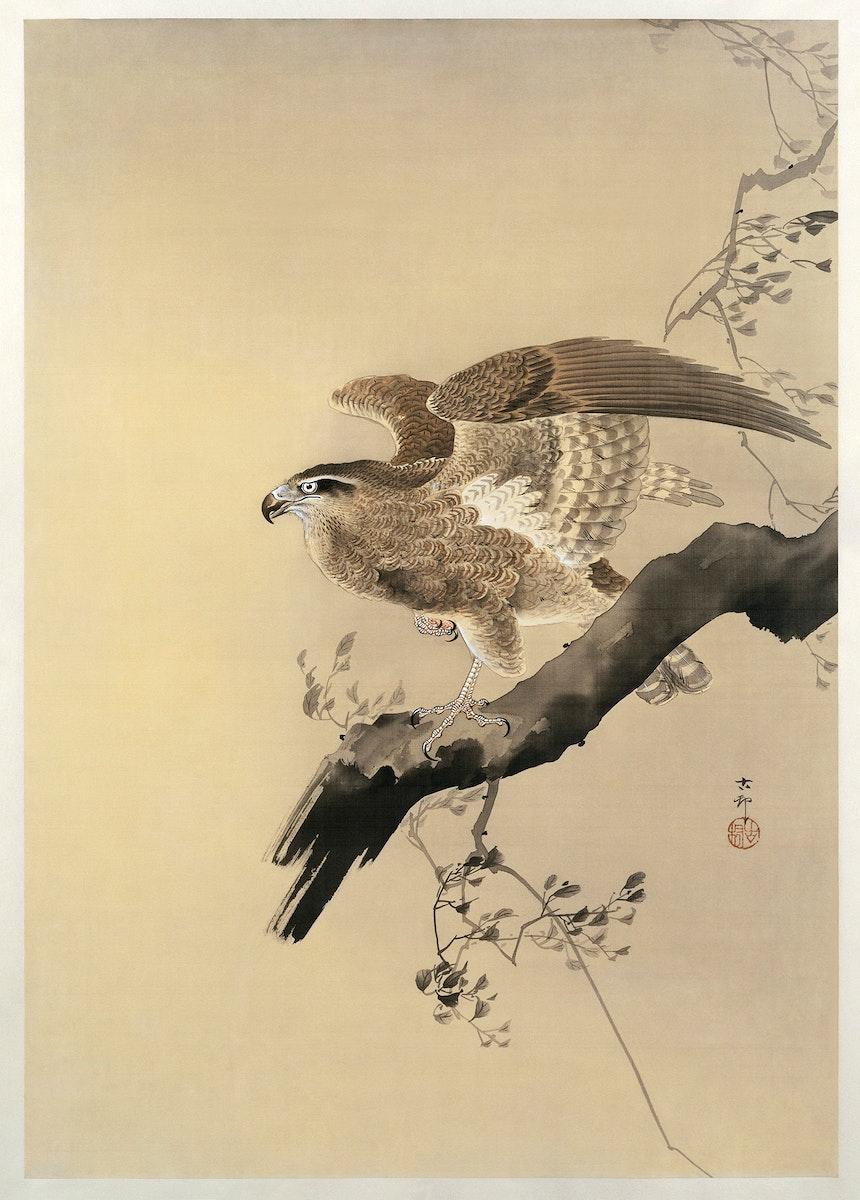 Hawk (1887-1945) by Ohara Koson (1877-1945). Original from The Rijksmuseum. Digitally enhanced by rawpixel.