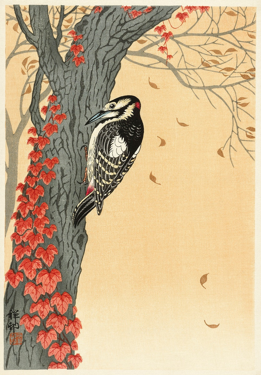 Great spotted woodpecker in tree with red ivy (1925 - 1936) by Ohara Koson (1877-1945). Original from The Rijksmuseum.…