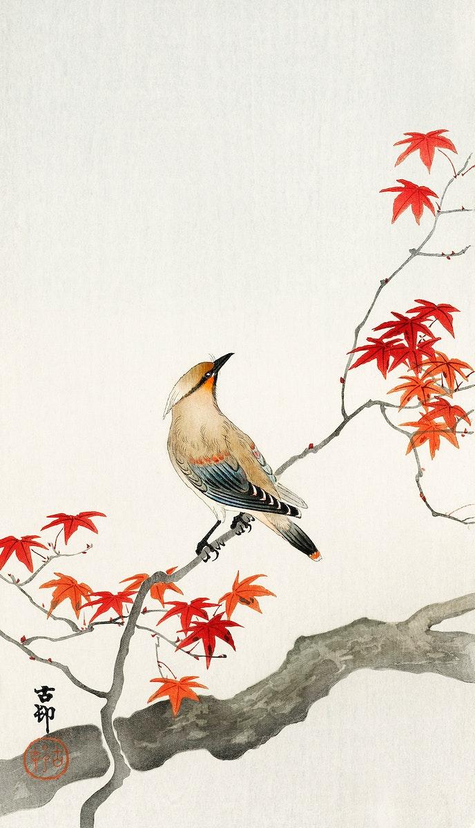 Japanese plague bird on maple (1900 - 1936) by Ohara Koson (1877-1945). Original from The Rijksmuseum. Digitally enhanced by…