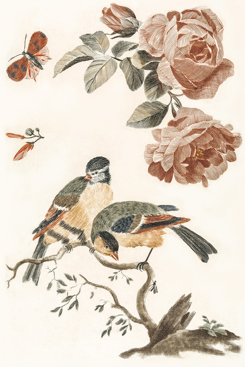 A Blue Tit and a Great Tit by Johan Teyler (1648-1709). Original from The Rijksmuseum. Digitally enhanced by rawpixel.