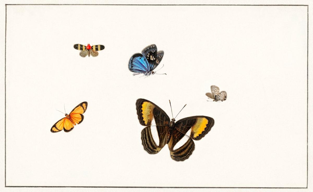 Five butterflies by Herman Henstenburgh (c.1677-c.1726). Original from The Rijksmuseum. Digitally enhanced by rawpixel.