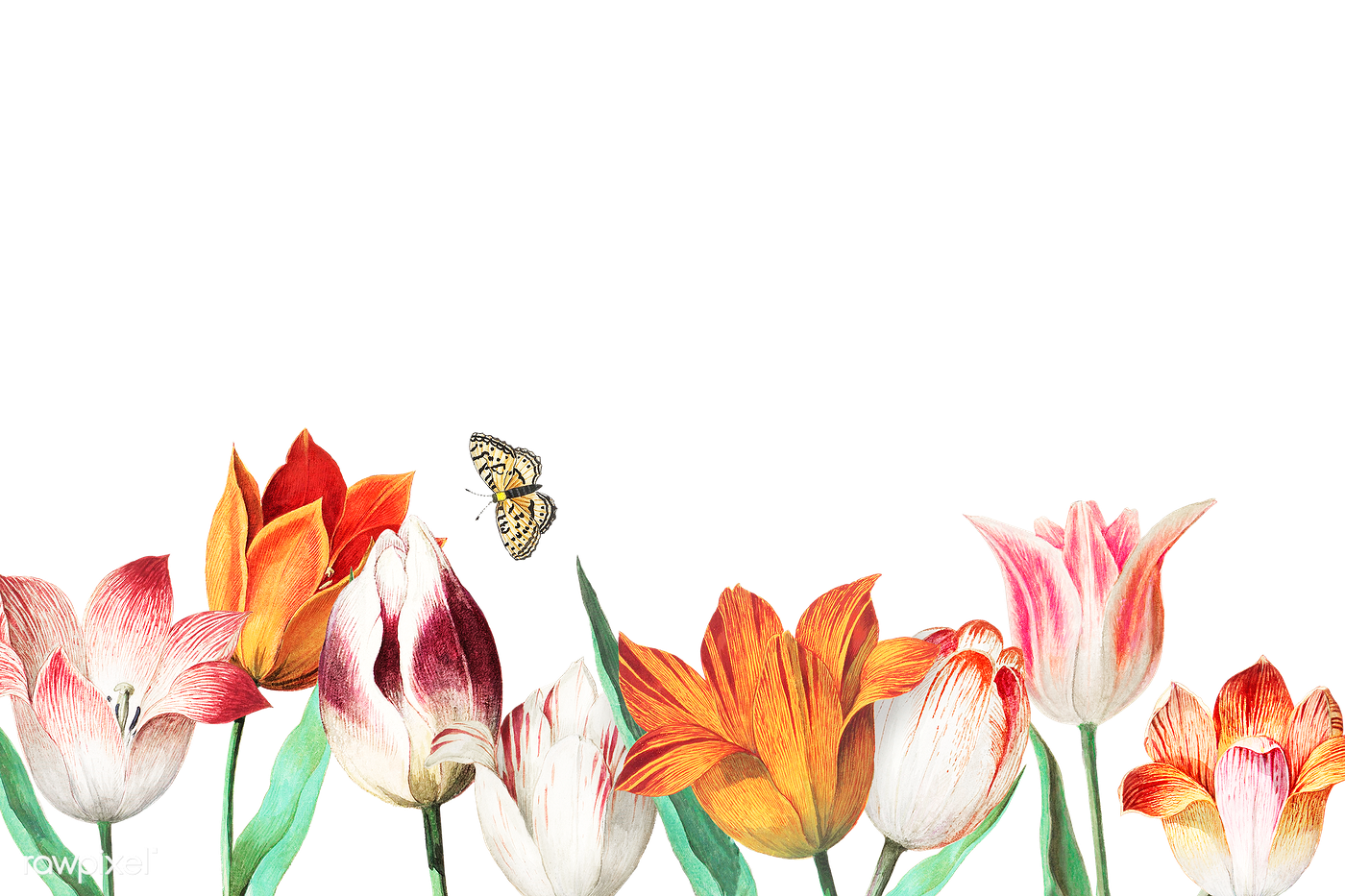 Tulip field border | Free transparent png - 562077