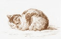 """Lying cat (1812) by <a href=""""https://www.rawpixel.com/search/Jean%20Bernard?sort=curated&amp;page=1"""">Jean Bernard</a> (1775-1883). Original from The Rijksmuseum. Digitally enhanced by rawpixel."""