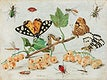 """Insects and Fruits (1660&ndash;1665) by <a href=""""https://www.rawpixel.com/search/Jan%20van%20Kessel?sort=curated&amp;type=all&amp;page=1"""">Jan van Kessel</a>. Original from The Rijksmuseum. Digitally enhanced by rawpixel."""