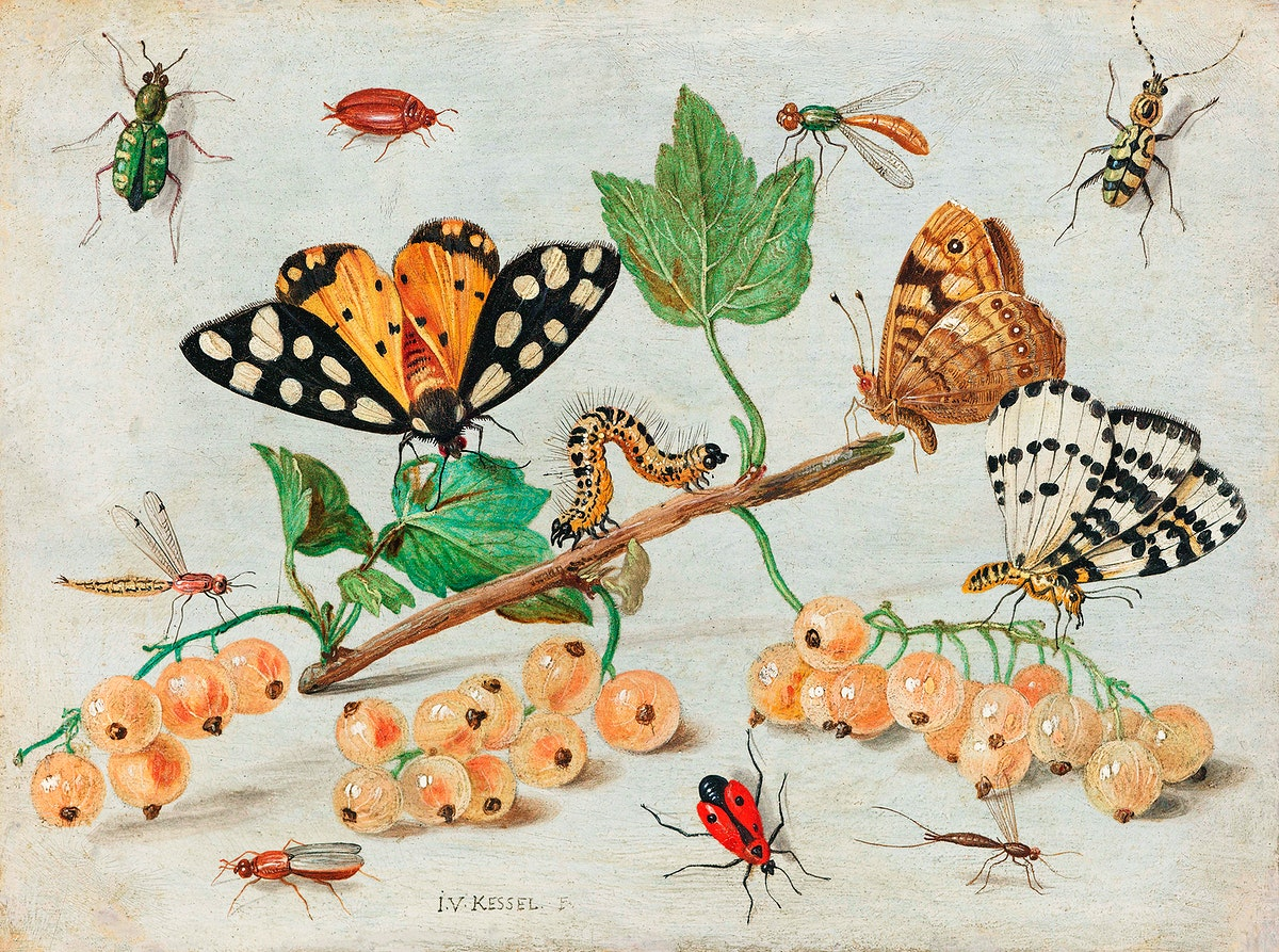 Insects and Fruits (1660–1665) by Jan van Kessel. Original from The Rijksmuseum. Digitally enhanced by rawpixel.
