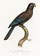 """Black Parrot (Coracopsis nigra) from Natural History of Parrots (1801&mdash;1805) by <a href=""""https://www.rawpixel.com/search/Francois%20Levaillant?sort=curated&amp;page=1"""">Francois Levaillant</a>. Original from the Biodiversity Heritage Library. Digitally enhanced by rawpixel."""