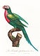 """The Red-Breasted Parakeet, Psittacula alexandri from Natural History of Parrots (1801&mdash;1805) by <a href=""""https://www.rawpixel.com/search/Francois%20Levaillant?sort=curated&amp;page=1"""">Francois Levaillant</a>. Original from the Biodiversity Heritage Library. Digitally enhanced by rawpixel."""
