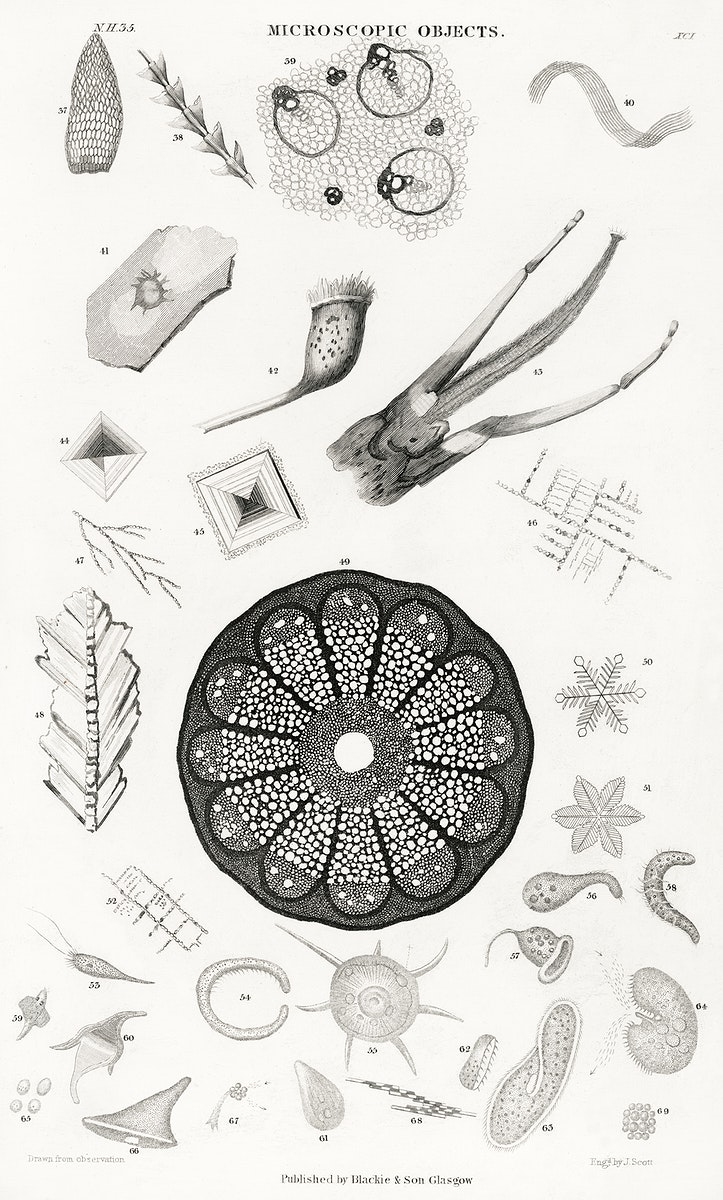 Microscopic Objects from A history of the earth and animated nature (1820) by Oliver Goldsmith (1730-1774). Digitally…