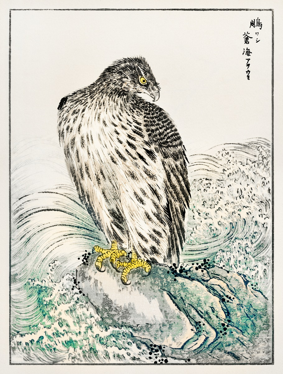 Japanese Golden Eagle and Dark Blue Sea illustration from Pictorial Monograph of Birds (1885) by Numata Kashu (1838-1901).…