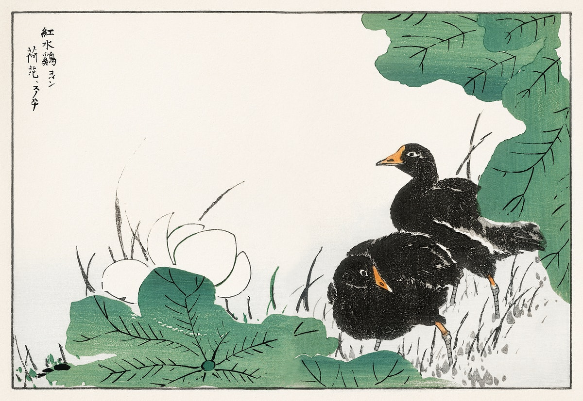 Coot and Lotus illustration from Pictorial Monograph of Birds (1885) by Numata Kashu (1838-1901). Digitally enhanced from our…