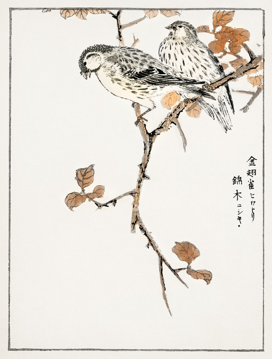 Siskin and Euonymus Alata illustration from Pictorial Monograph of Birds (1885) by Numata Kashu (1838-1901). Digitally…