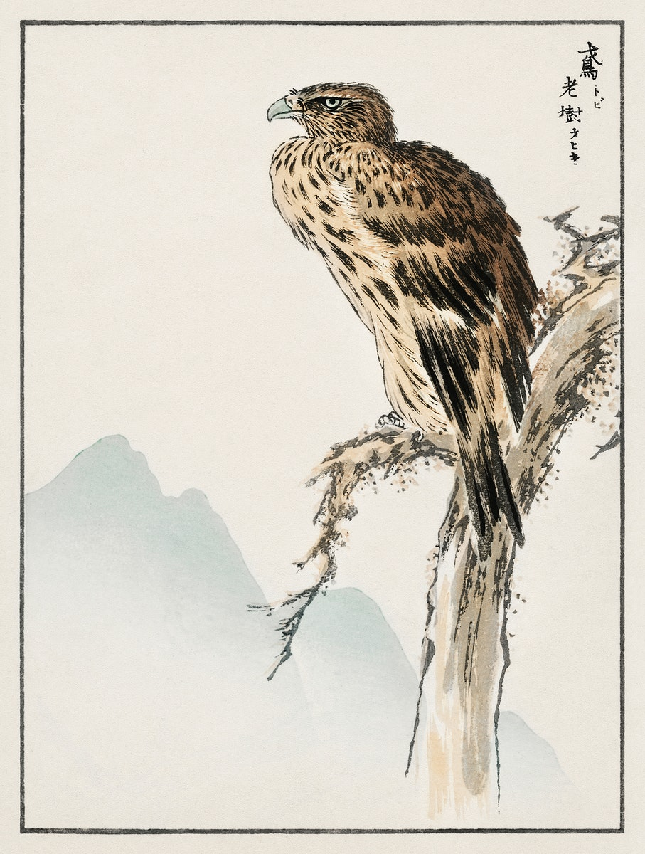 Black-eared Kite illustration from Pictorial Monograph of Birds (1885) by Numata Kashu (1838-1901). Digitally enhanced from…