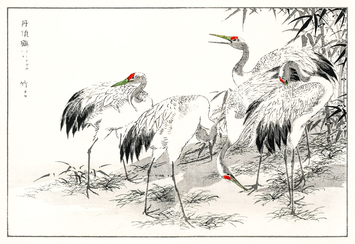 Japanese Crane and Bamboo illustration from Pictorial Monograph of Birds (1885) by Numata Kashu (1838-1901). Digitally…