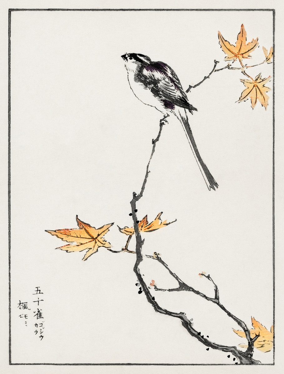 Japanese Long-tailed Tit and Maple Tree illustration from Pictorial Monograph of Birds (1885) by Numata Kashu (1838-1901).…