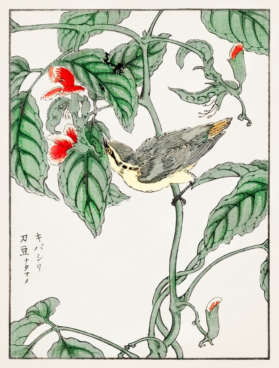Japanese Tree-creeper and Pea illustration from Pictorial Monograph of Birds (1885) by Numata Kashu (1838-1901). Digitally…