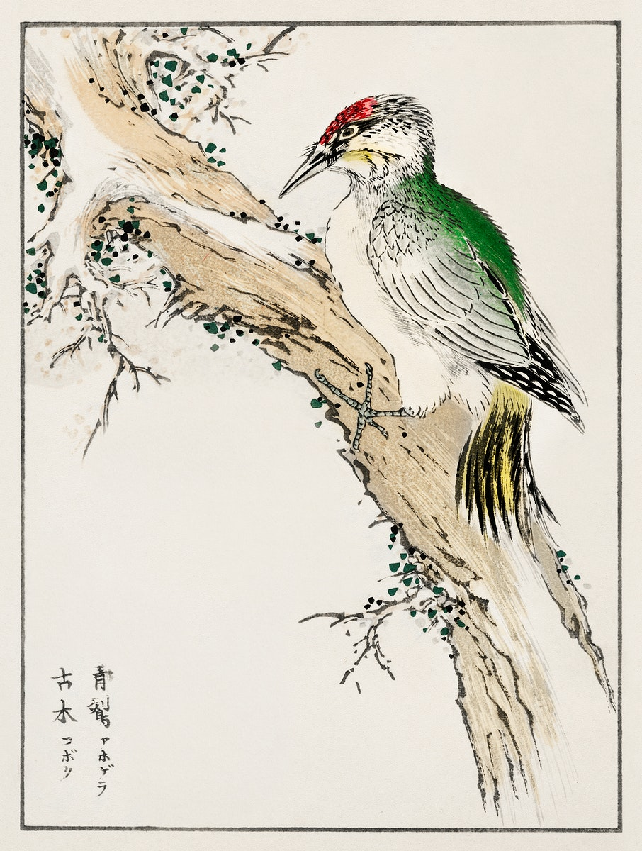 Japanese Green Woodpecker illustration from Pictorial Monograph of Birds (1885) by Numata Kashu (1838-1901). Digitally…