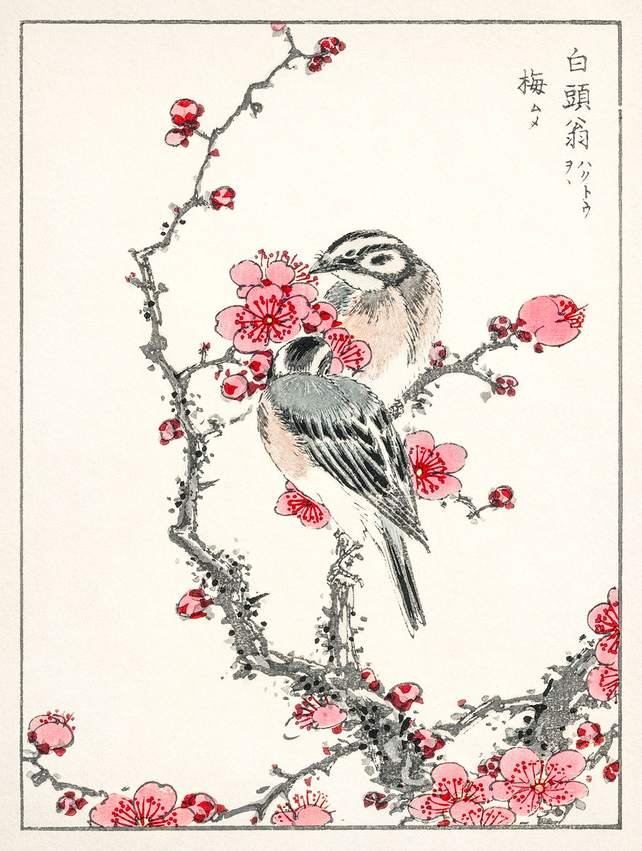 Pine Bunting and Plum Tree illustration from Pictorial Monograph of Birds (1885) by Numata Kashu (1838-1901). Digitally…