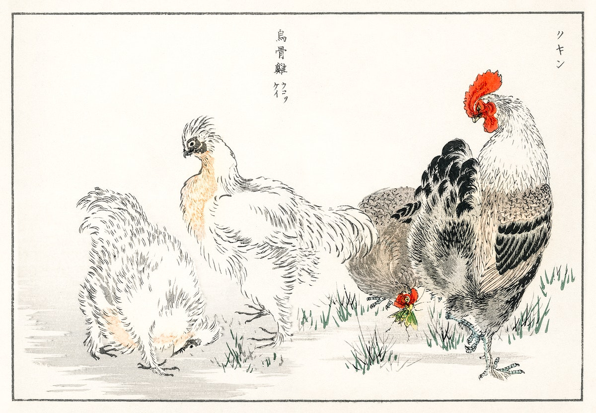 Domestic Fowl illustration from Pictorial Monograph of Birds (1885) by Numata Kashu (1838-1901). Digitally enhanced from our…