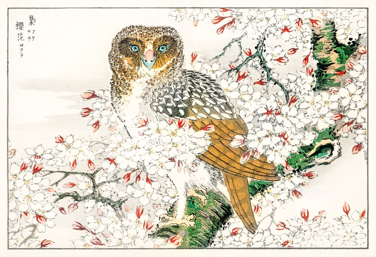 Short-eared Owl and Cherry Flower illustration from Pictorial Monograph of Birds (1885) by Numata Kashu (1838-1901).…