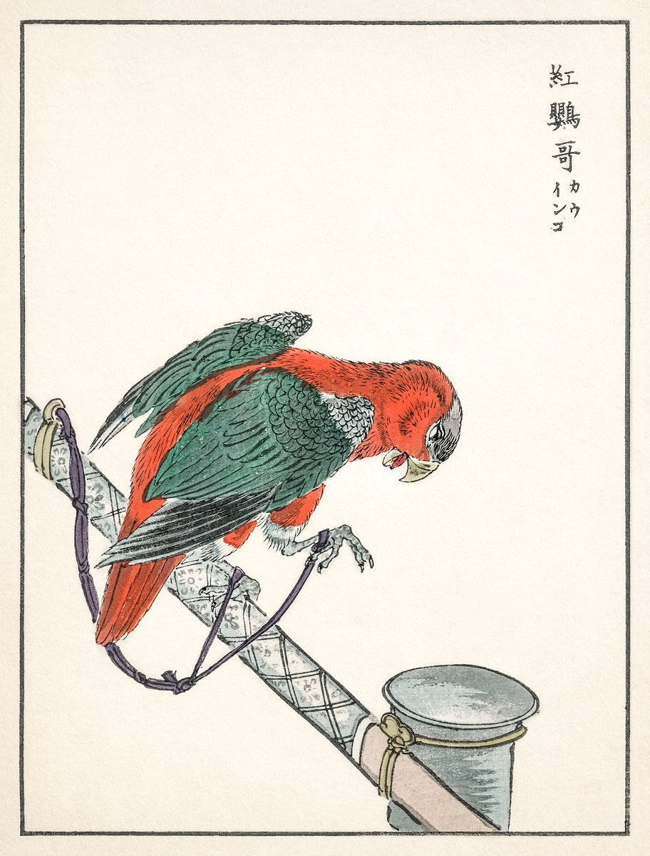 Macaw illustration from Pictorial Monograph of Birds (1885) by Numata Kashu (1838-1901). Digitally enhanced from our own…