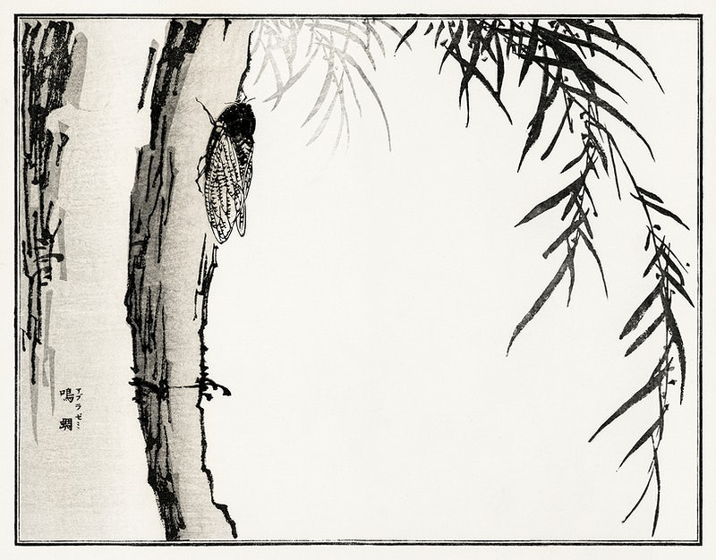 Cicada illustration from Churui Gafu (1910) by Morimoto Toko. Digitally enhanced from our own original edition.
