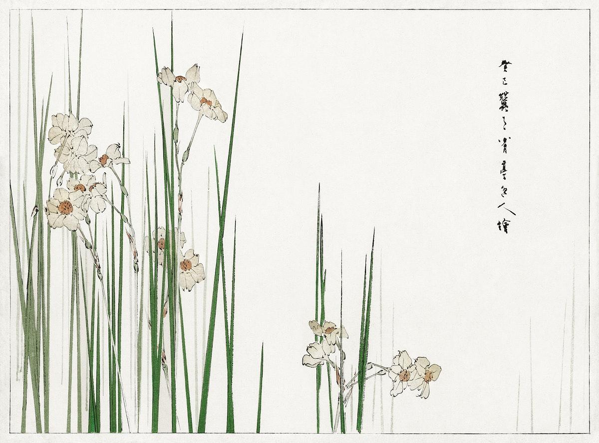 Jonquil illustration from Bijutsu Sekai (1893-1896) by Watanabe Seitei, a prominent Kacho-ga artist. Digitally enhanced from…