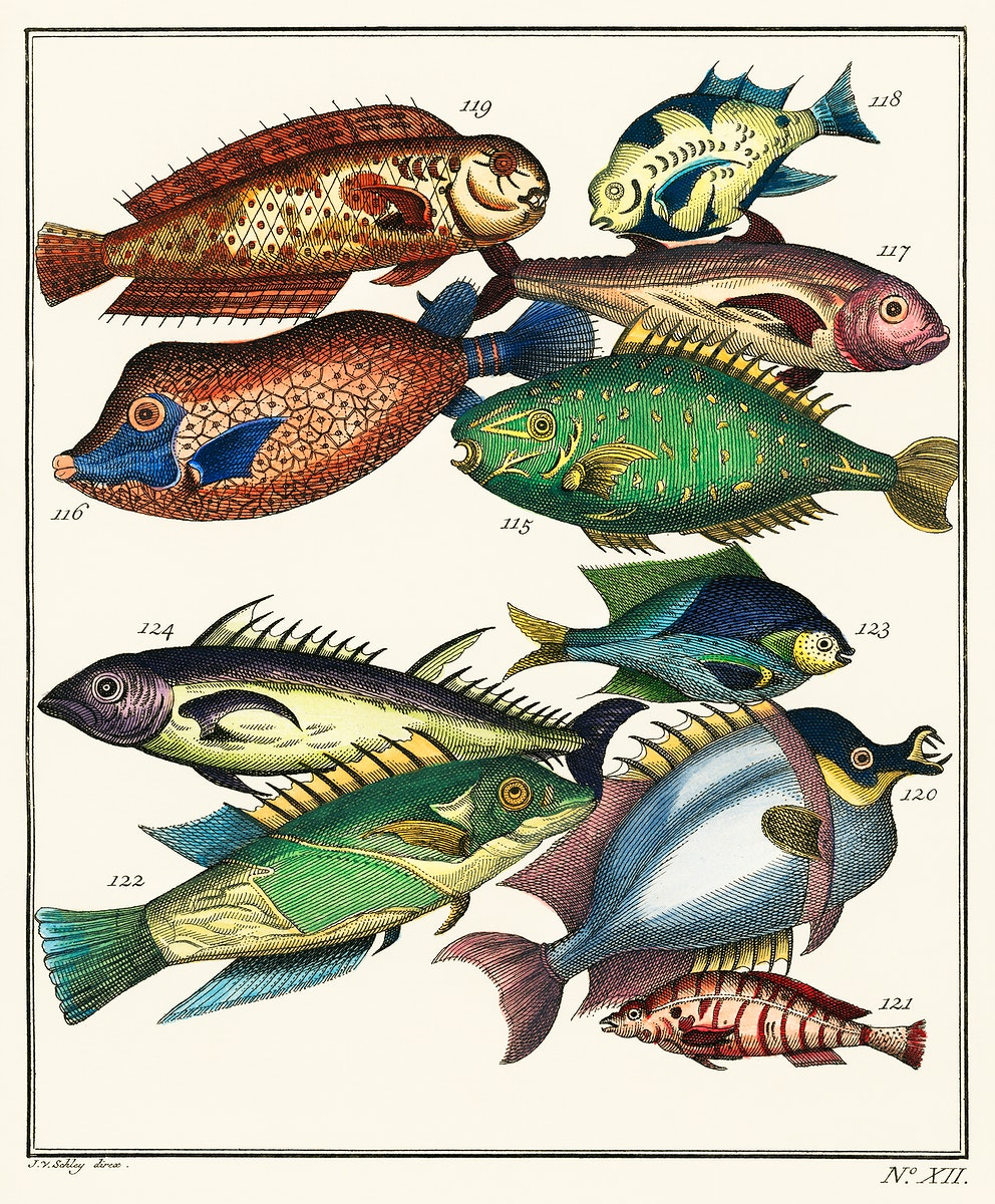 Histoire Generale des Voyages (1767) by J V Schley, a collage of colorful rare exotic fish. Digitally enhanced from our own…