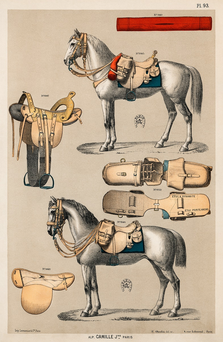 A chromolithograph of horses with antique horseback riding equipments from an antique horseback riding catalog (1890).…
